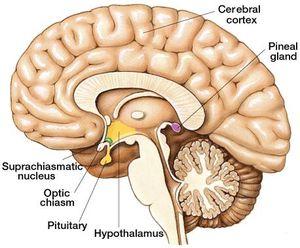 Ahol a prosztatagyulladást hatékonyan kezelik. Krónikus prosztatagyulladás - bizonytalan tünetek
