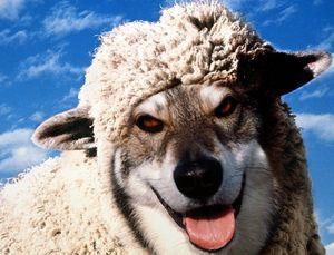 Báránybőrbe bújt farkas -  győri pszichiáter, pszichiáter Győr, depresszió, pánik, alvászavar, pszichológus