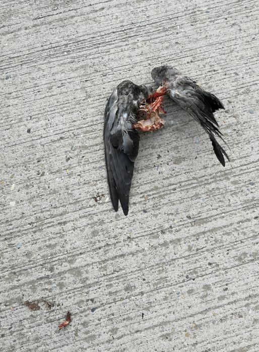 (COVID) Halál Angyala - oltás után