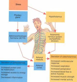 Stressz élettana - distressz, eustressz, szorongás, győri pszichiáter, pszichiáter Győr, depresszió, pánik, alvászavar, pszichológus