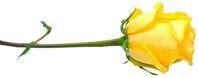 Törőcsik Mari - tisztelgés és hála - Memento Mari